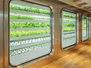 『ビルの中に野菜工場?』Cafeの下の階に、本当にあるんです♪カフェ スティロ自慢のサラダを自信をもってお届けします☆