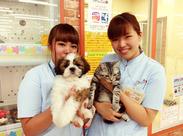 ★知識不要★動物が好きならそれだけでOK*可愛いペットに癒やされながら働いてみませんか?