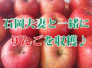 アナタの頑張りにりんごは素直に応えてくれます! 「りんご」と言っても色んな種類があるので目利きができるようになるかも?!