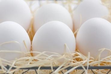 【卵の仕分け・パック詰め】≪とっても簡単!≫卵の選別作業とパック詰め!!女性スタッフが活躍中!!家計も大助かり♪卵もらえることもあるかも!?