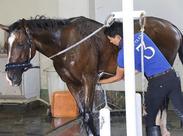 知ってましたか?馬も表情が豊かなんです。性格もそれぞれで、甘えん坊な子やのんびり屋な子もいます。