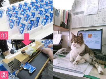 【左】袋に入れて→ピッって閉めるだけ! 【右】オフィスで飼っている猫ちゃんです♪
