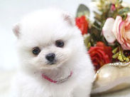 見てください!!!!めちゃくちゃかわいいんです!!!! こんなカワイイ~~~子猫や子犬がたくさん♪