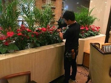花や緑、観葉植物のレンタルや販売を行う当社♪メンテナンスなので、直接販売などは行いませんが、植物が好きな方は大歓迎です!